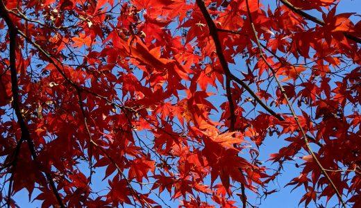密を避けて河口湖で紅葉を楽しむ穴場スポット【河口湖総合公園】