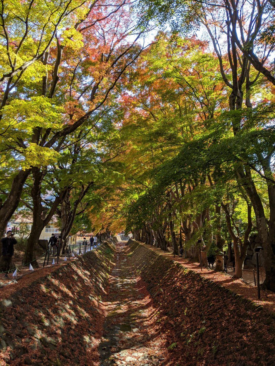 富士河口湖紅葉まつりもみじ回廊