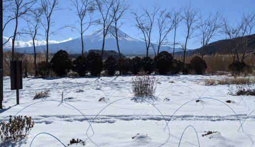 河口湖、初雪。