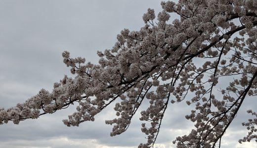 第十回富士・河口湖さくら祭り2021